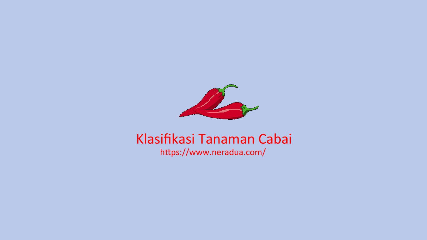 klasifikasi tanaman cabai